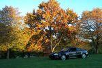 fall tony's car 012.jpg
